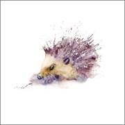 Blank Card Hedgehog (RT84704)